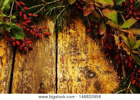 Autumn background. Composition with fir branches, branches with berries dogwood on a red shabby wooden background. Selective focus