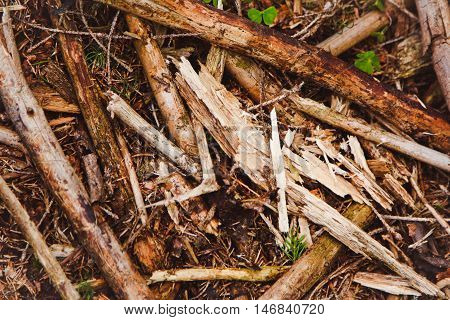 Pile Of Tree Branches Composition As A Background Texture