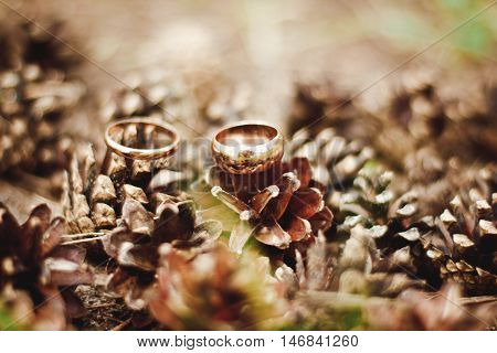 Beautiful Two Gold Wedding Rings Lying On A Pile Of Pine Cones