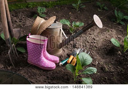 garden tools near green young cabbage before pouring