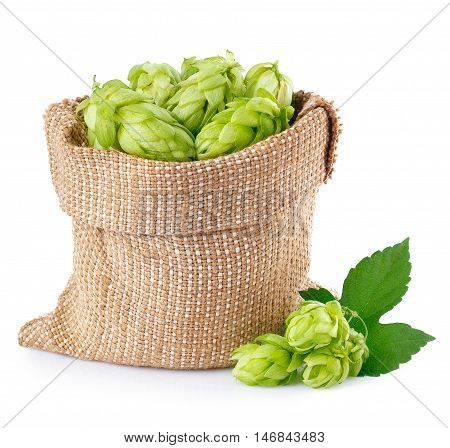 Fresh green hops in burlap bag with branch near isolated on white background. Hop cones isolated on white. Hop for beer in burlap bag. Sack of fresh hops isolated on a white background.