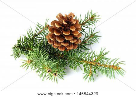 Spruce branch and fir cone isolated on white background