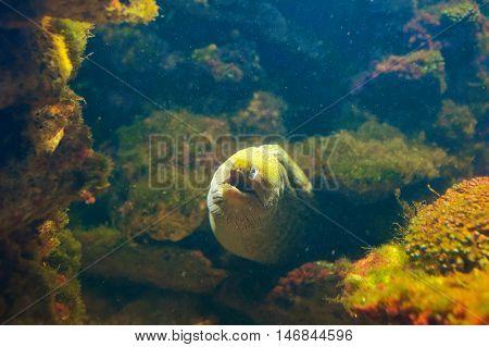 Moray on the deep