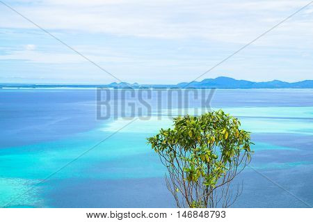 Tropical tree growing at high altitude from Bohey Dulang.Bohey Dulang island is the second largest island of Semporna Islands Park and it has one of the most beautiful scenery in Sabah,Borneo.Minimalism concept.