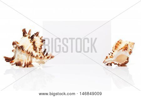 Blank White Visit Card With Two Sea Shells Isolated