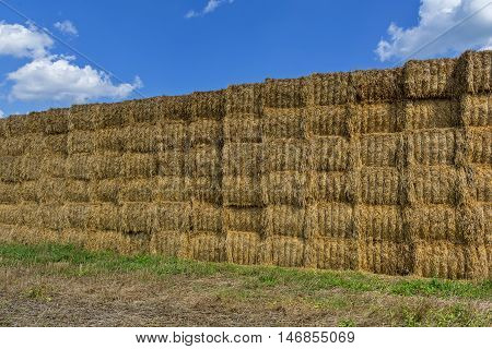 Straw or hay stacked in a field after harvesting.Straw bale wall.