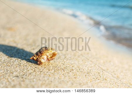 Shell on sand and blue wave beach blank background