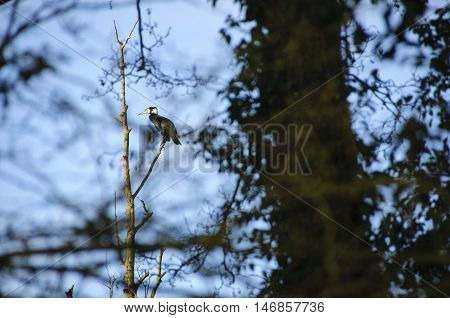 Heron in a tree by a lake in north Bedfordshire England UK