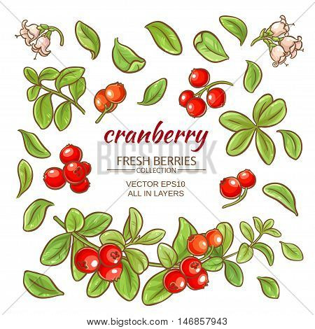 cranberry elements vector set on white background