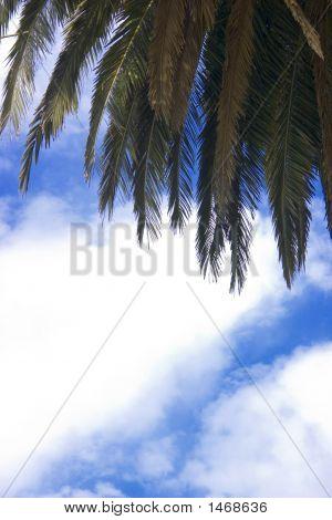 Beneath The Palm Tree