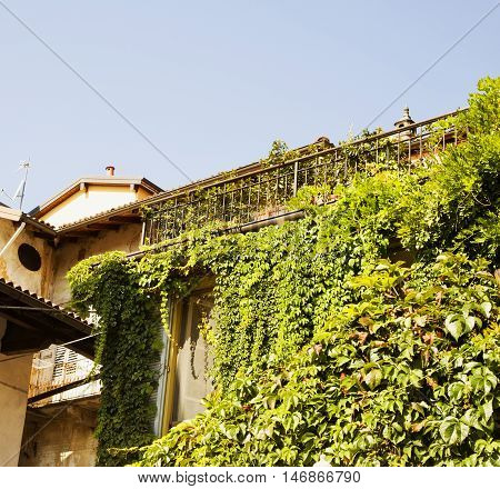 Ivy filled window of house horizontal image