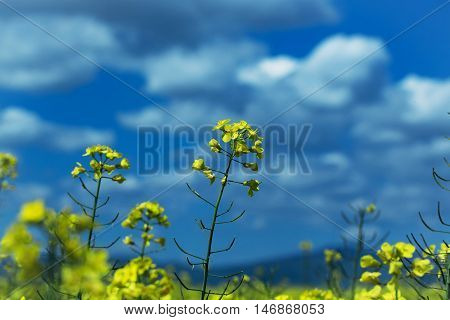Yellow Flowers Blossoming