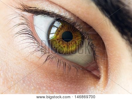 Macro Photo Of  Young Male Brown Eye