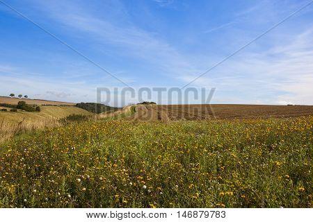 Wildflowers In Yorkshire