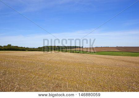 Harvest Time In Yorkshire