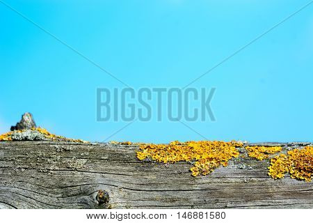 Lichen or moss on old wooden fence - selective focus