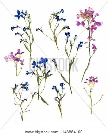 dry set of blue and pink small forest flowers and green leaf isolated