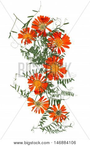 Application, A Bouquet Of Dried  Calendula Flowers And  Leaves Of Sweet Peas