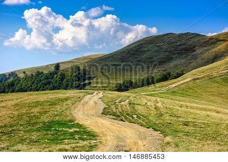 Path Through Hill Side Meadow In Carpathians