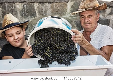 Young boy with grandfather strew bunches of grapes to the vine press. Vintage theme. Autumn harvest. Two farmers.