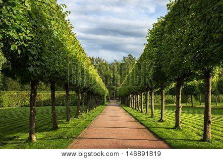Garden of the Catherine Palace Pushkin. St. Petersburg. Russia