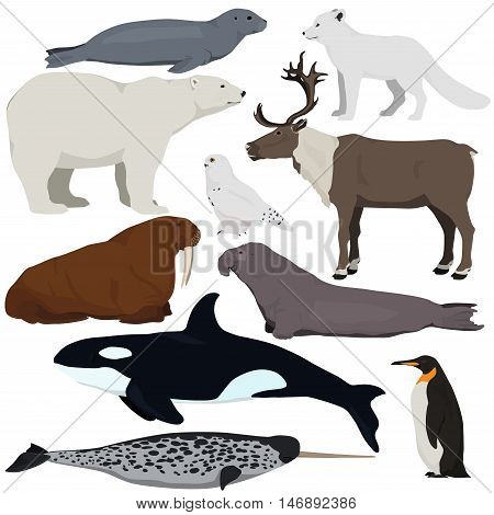 Set of cartoon arctic and antarctic animals. Vector illustration of polar bear seal arctic fox penguin killer whale snowy owl elephant seal walrus reindeer narwhal.