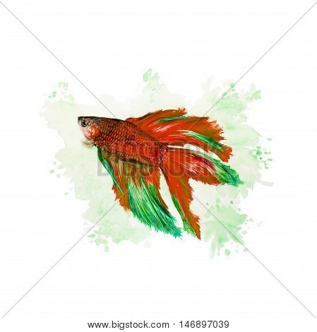 Siamese Fighting Fish On A Green Background