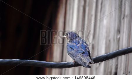 birds, sparrow, cute and cuddly in good weather in the spring