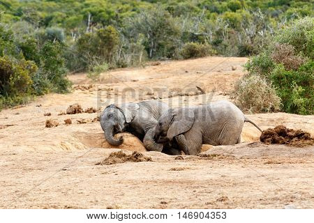 Get Up My Brother You Ar And African Bush Elephant