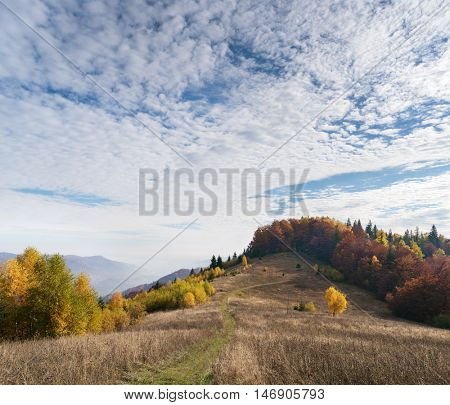 Road in a mountain meadow. Autumn landscape with deciduous forest and sky with beautiful clouds. Carpathians, Ukraine, Europe