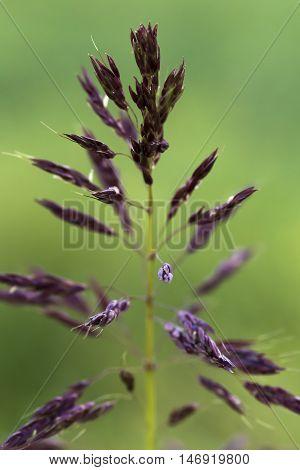 Unknown purple flower at blur green background