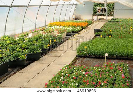 horizontal picture of flowers in a greenhouse in France