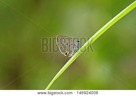 Butterfly. Butterfly on leaf. Butterfly in tropical garden. Butterfly in nature.