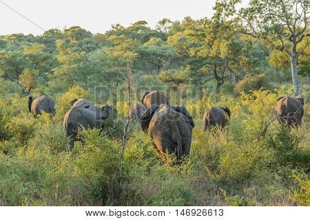 Herd Of Elephants Walking Away In The Bush.