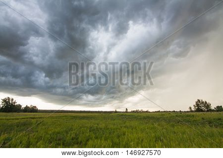 Landscape of a storm at Fish Creek Provincial Park. Motion Blur in the grass due to high winds.