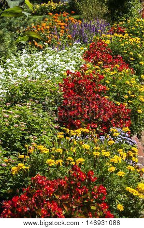 Flower bed with different colored flowers as natural background