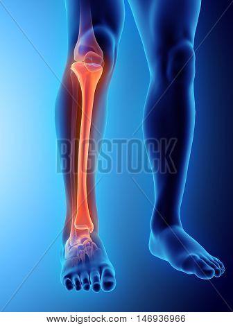3D Illustration Of Tibia, Medical Concept.