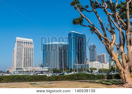 San Diego Embarcadero Skyline with convention center with coral trees.