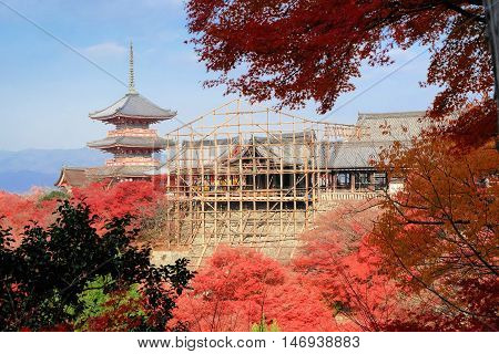 Kiyomizu-dera temple with red maple leaves under renovation period