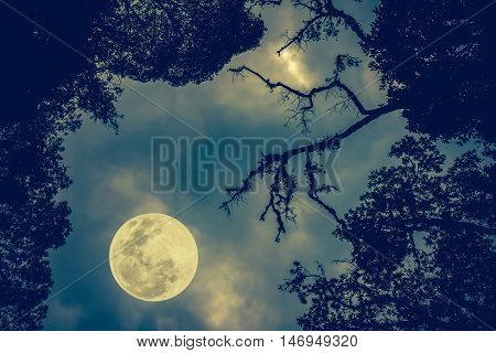 Silhouette Of The Branches Of Trees Against The Night Sky In A Full Moon. Outdoors. Vintage Tone Eff