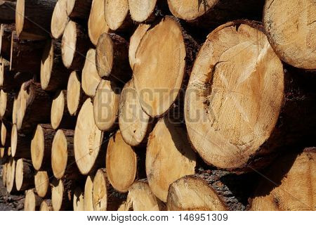 Pile of Wood in Lechtal Valley. Tirol. Austria