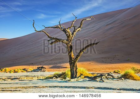 Ecotourism in Namibia, Namib-Naukluft National Park. The bottom of dried lake Deadvlei, with dry trees. Sunset