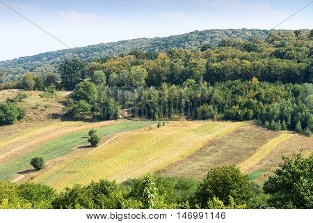 Corn fields and green forest landscape in Moldova at Capriana village