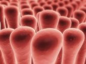 foto of villi  - 3d rendered close up of colon villi - JPG