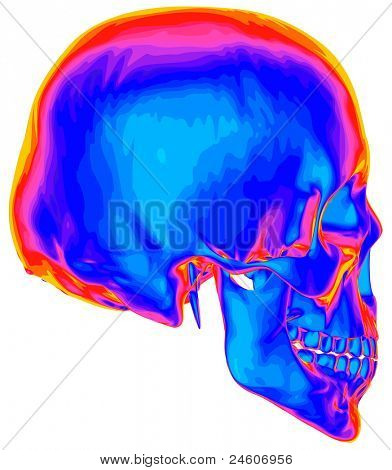 Thermal image of the human skull, isolated on white background. Bitmap copy my vector ID 74509651
