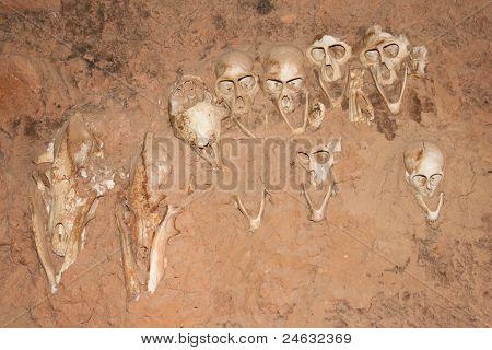 Monkey Skulls Into The Walls, Mali (africa).