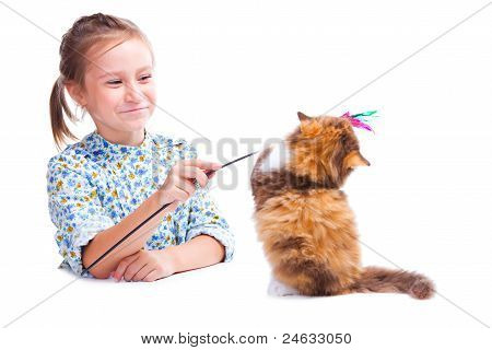 Girl Playing With Funny Tortoise British Kitten