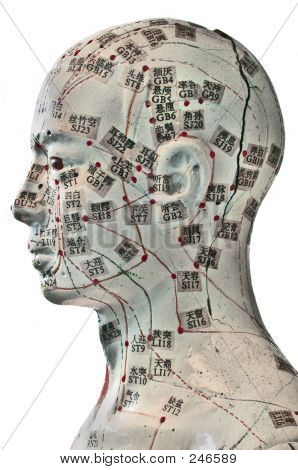 Acupuncture Model-cutout