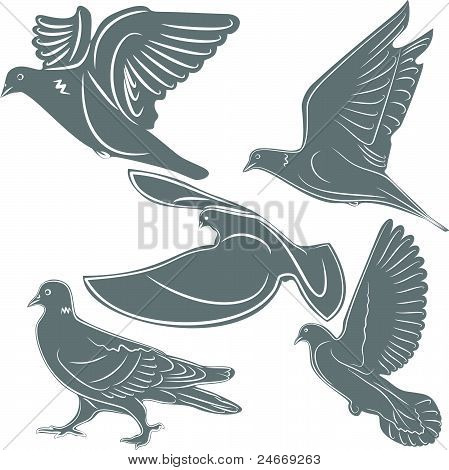 Pigeons, a bird symbol, the illustration