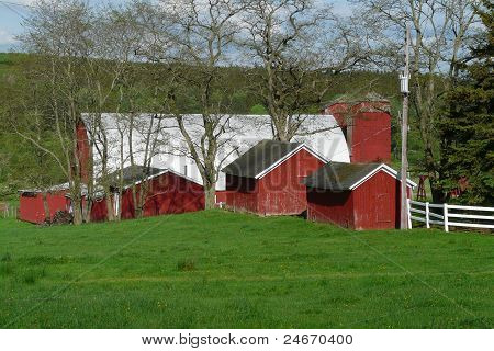 Farm with Red Barns